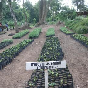 """3de inzending P-NUTS Awards 2015: """"Bos in Kagera Tanzania, niet bij bomen alleen"""""""